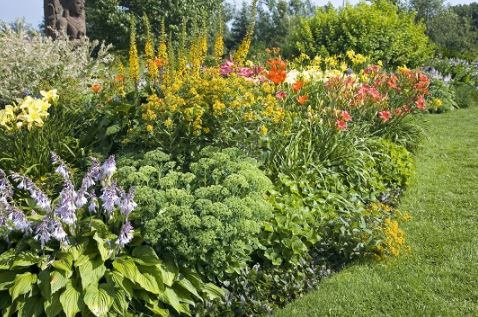 Best Perennials For Garden