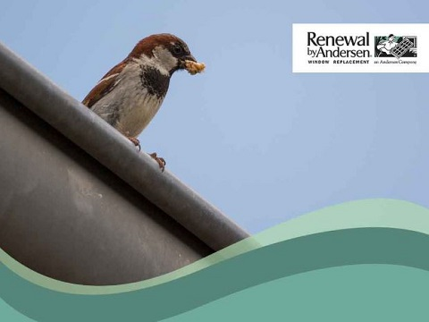 how to keep birds out of your roof